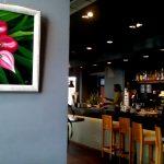 Imagen de Cuadros Mirelu Expuestos en Restaurante Minotauro
